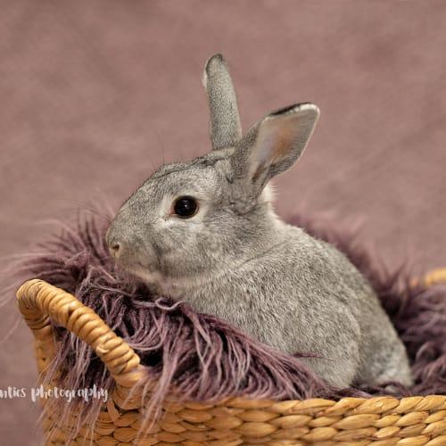 Noah - Domestic Rabbit