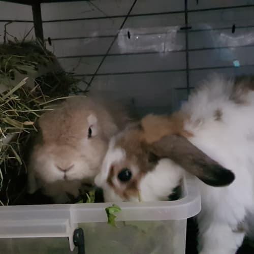 Maple & Milton - Cashmere Rabbit