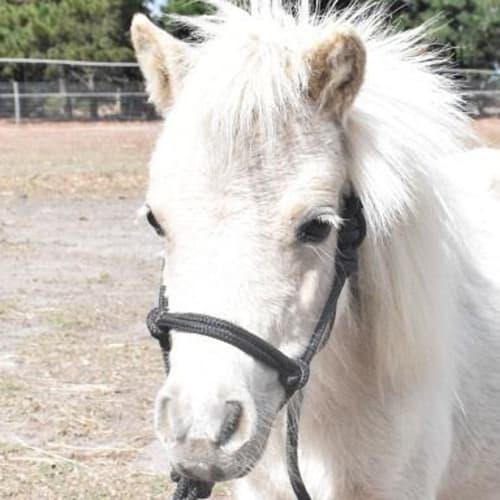 Hero  909339 -  Horse