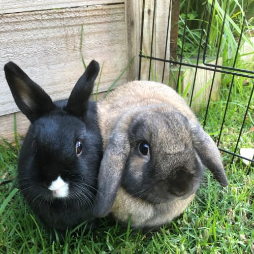 Sushi and Randy  - Dwarf Rabbit