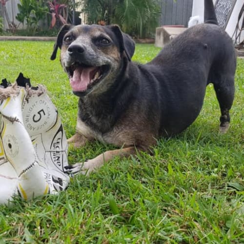 Jemima - Mixed Breed Dog