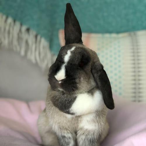Dani  - Domestic Rabbit