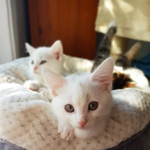 Betty and Pepeope - Domestic Short Hair Cat