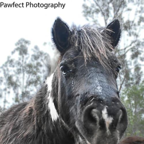 Apache -  Horse