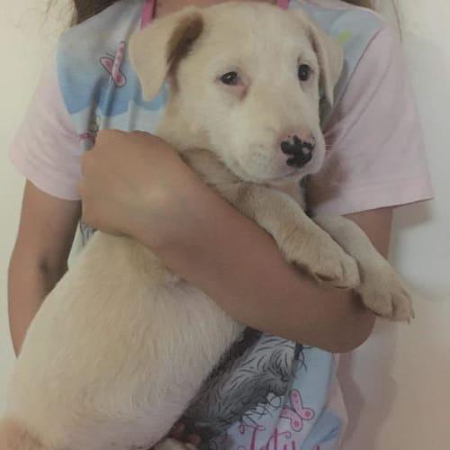 Mabel - Mixed Breed Dog