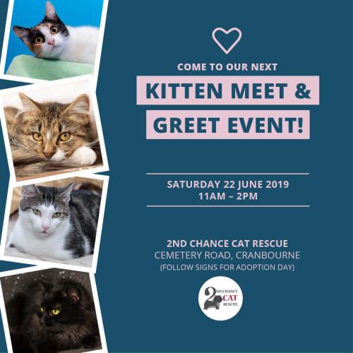 Kameo Kreem **2nd Chance Cat Rescue** - Domestic Medium Hair Cat