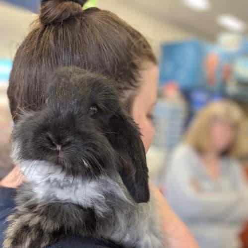 John Snow - Cashmere Rabbit