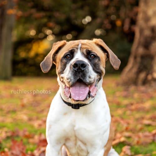 Kelai - Mixed Breed Dog