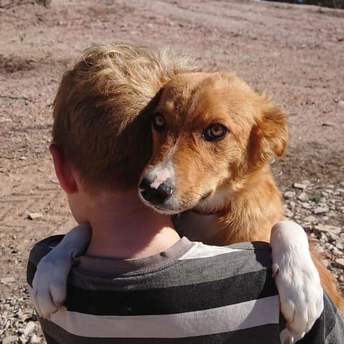Anzac - Border Collie Dog