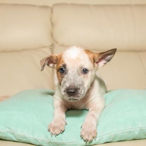 Tonto - Mixed Breed Dog