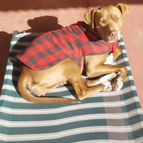 Bindi with Alison a mum. - Staffy Dog