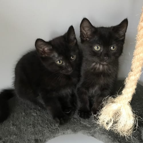 Search Rescue Cats and Kittens - PetRescue