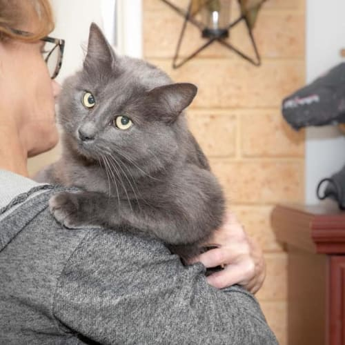 562 - Mello - Domestic Medium Hair Cat