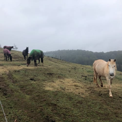 Horses and Ponies for Adoption! -  Horse