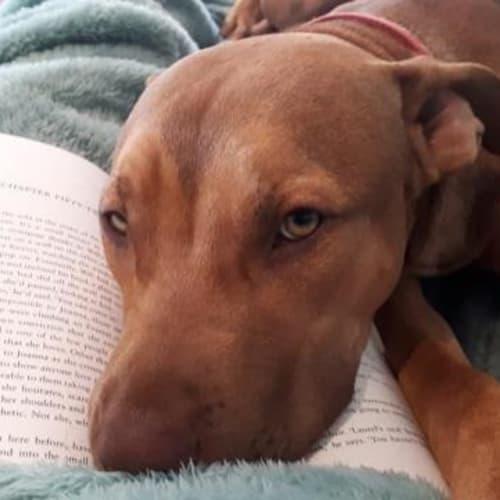 Oscar - Mixed Breed Dog