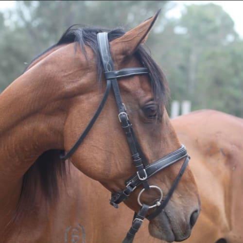 Lindt -  Horse