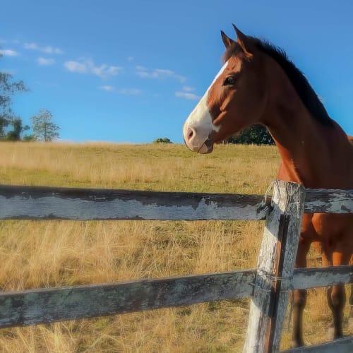 Ryley -  Horse