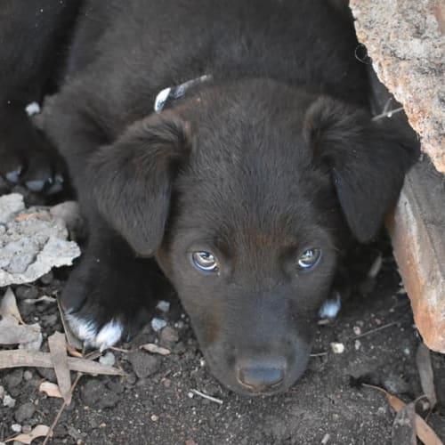 Will Turner - Kelpie Dog