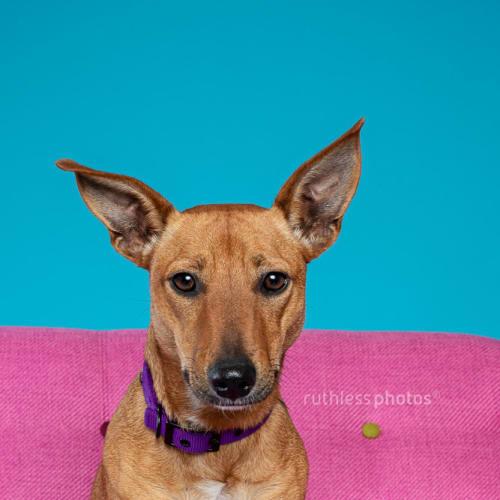 Pikk - Mixed Breed Dog