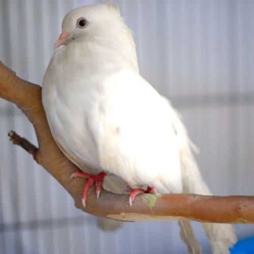 Pidgy -  Bird