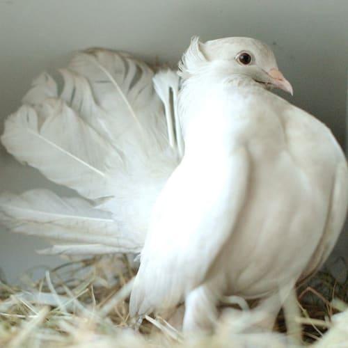Moon -  Bird