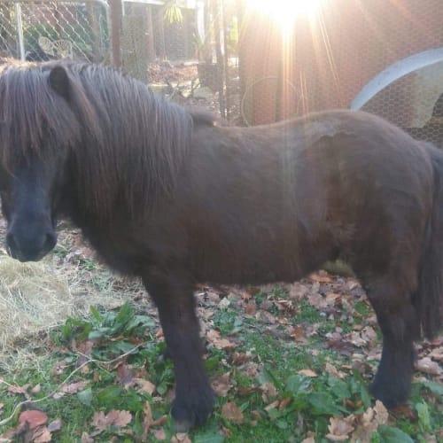 Humphrey  -  Horse