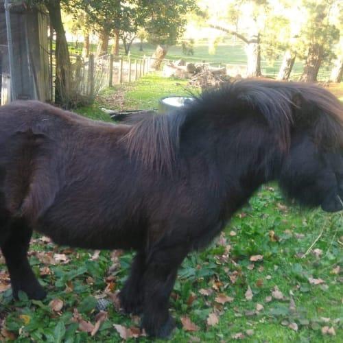 Cozzie -  Horse