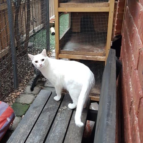 Fynn - Domestic Short Hair Cat