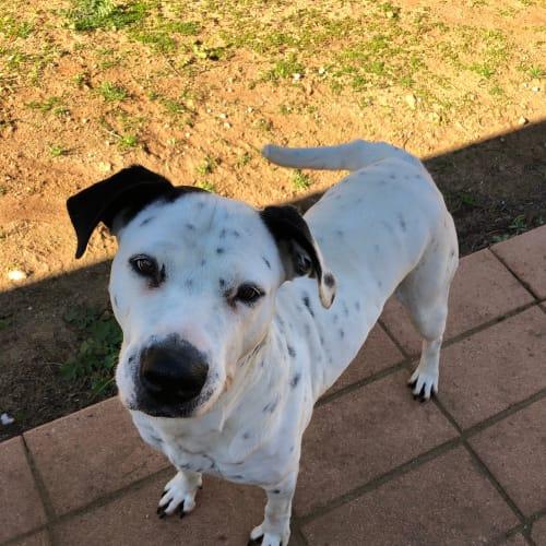 Bess - Mixed Breed Dog