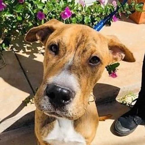 Barney - Mixed Breed Dog