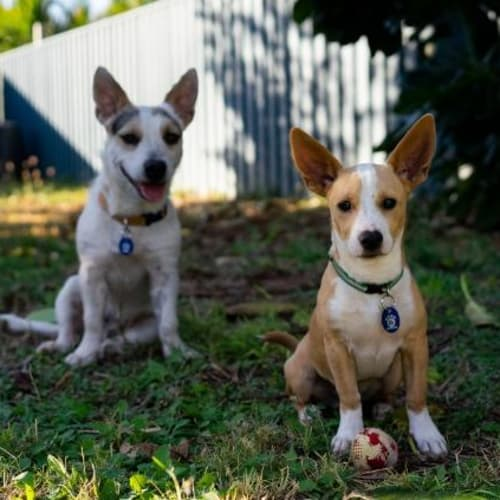 Zeiko - Mixed Breed Dog