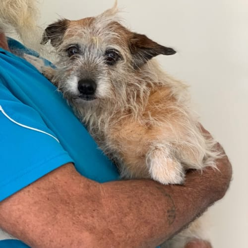 Teri - Terrier Dog