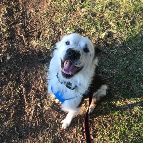 Chilli ~ 6 year old Border Collie X - Border Collie Dog