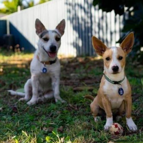 Zaron - Mixed Breed Dog