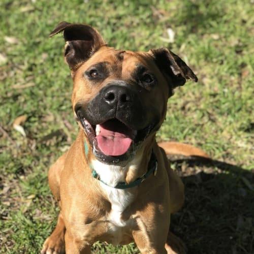 Quill - Medium Mixed Breed Dog