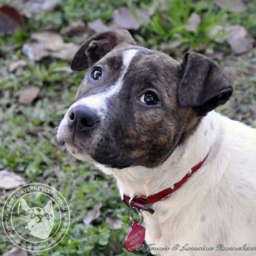 Trenwith - Mixed Breed Dog