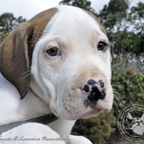 Vincent - Mixed Breed Dog