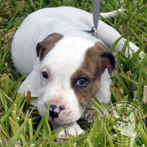 Freda - Mixed Breed Dog