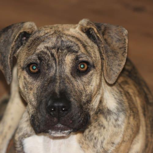 Wilbur - Mixed Breed Dog