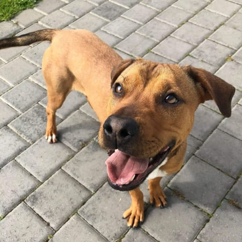 Armani - Mixed Breed Dog