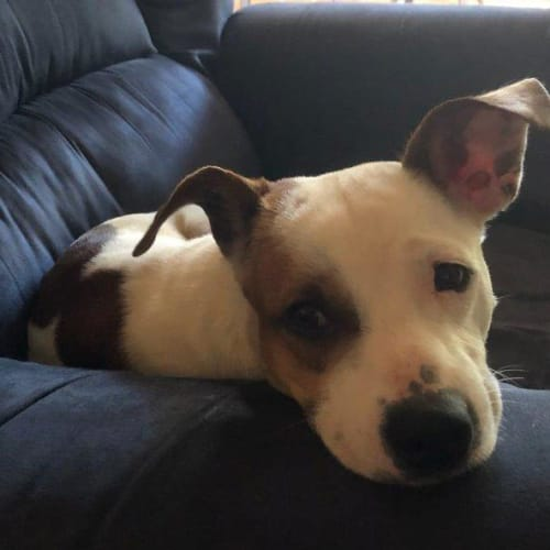 Zander - Mixed Breed Dog