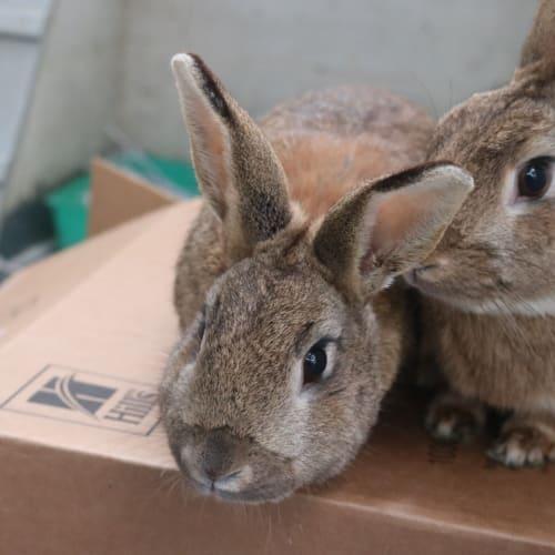 Trixstar - Bunny Rabbit
