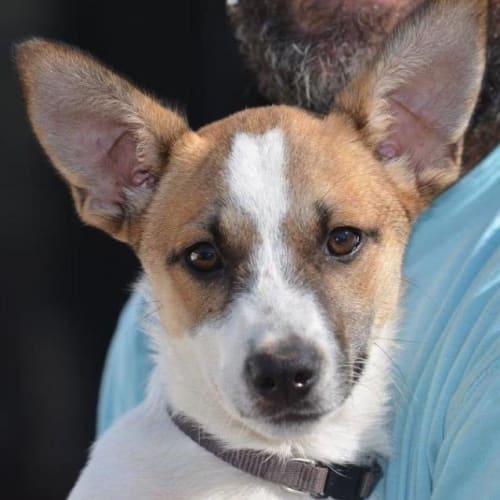 Jango - Mixed Breed Dog