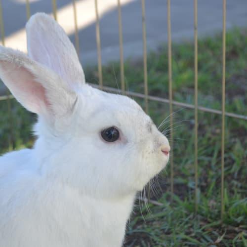 Plunkett - Dwarf Rabbit