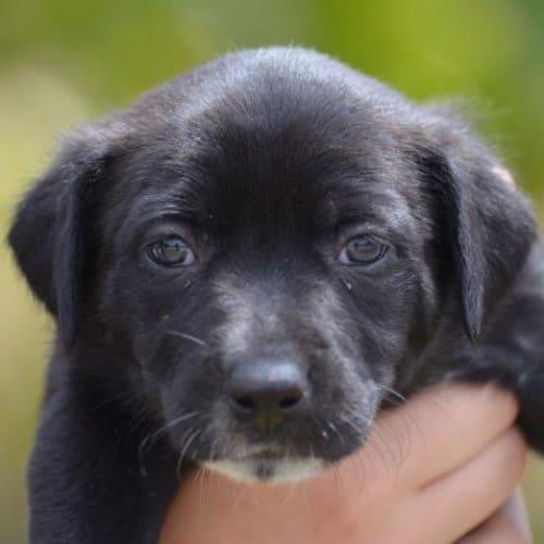 Fernley - Kelpie x Mixed Breed Dog