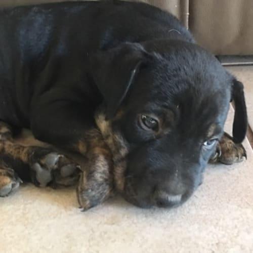 Dinkum - Mixed Breed Dog