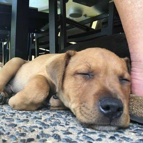 Ripper  - Mixed Breed Dog