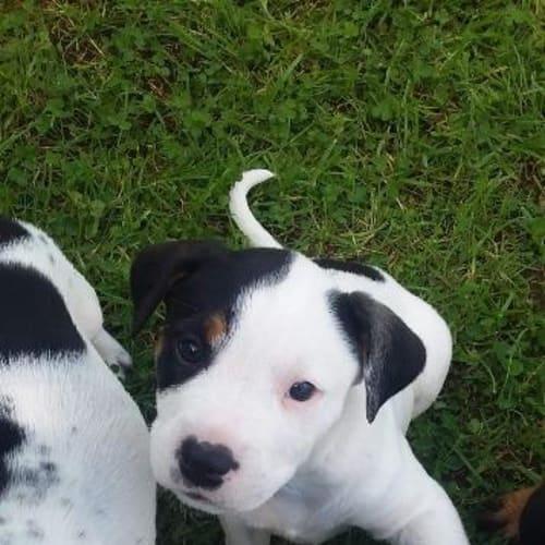 Spot - Mixed Breed Dog