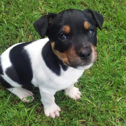 Marlow - Mixed Breed Dog