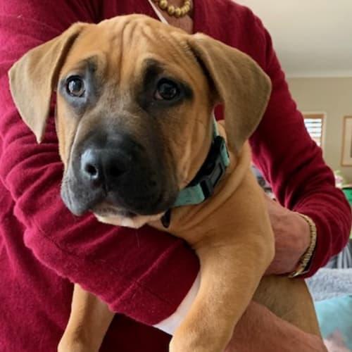 Frankie - Mixed Breed Dog